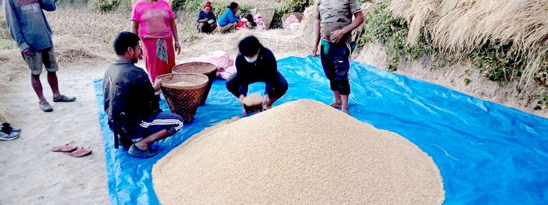 मिक्लाजुङका कृषकहरु पुरस्कार पाउने भएपछि खेती गर्न उत्साहित